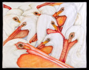American White Pelcans by Velda Newman